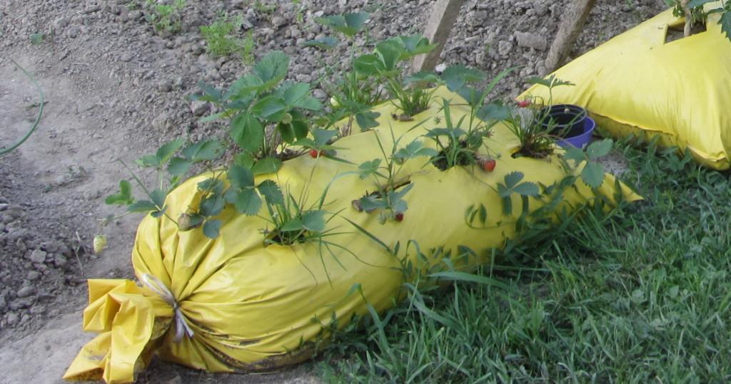 jagode u horizontalnoj vreći