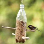 boca_hranilica_ptice